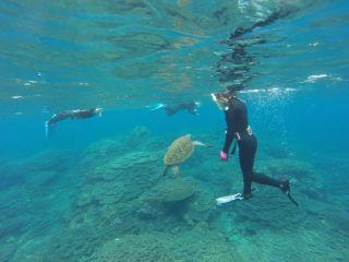 ウミガメ遭遇率99%!八丈島でスノーケリング&素潜り体験!(AMコース)☆