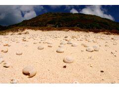 南島に広がる砂地に目をやると半化石の貝がいたるところに埋まっている