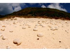 白い砂浜をよく見ると絶滅したマイマイの半化石が所々にみれる
