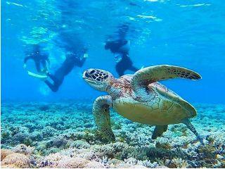 【西表島】地域共通クーポンOK!a20.バラス島・ウミガメシュノーケル&マングローブSUP源流巡り【ツアー写真データ無料】