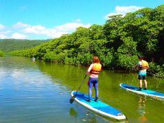 西表島の大自然を感じるマングローブSUP(サップ)体験