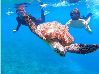 西表島 マングローブSUP(サップ)&バラス島でウミガメと一緒に泳げるシュノーケリング