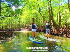 西表島SUP(サップ)体験・マングローブの川をのんびりSUPで漕いでみよう~西表島SUPツアー