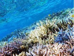 バラス島シュノーケリングで色鮮やかなサンゴ礁域を泳ごう~