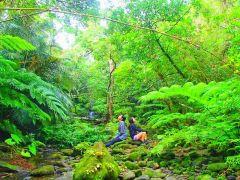 西表島の大自然をリアルジャングルトレッキングで癒されよう~西表島トレッキングツアー