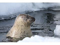 旭山動物園では動物たちの冬ならではの姿が観られます