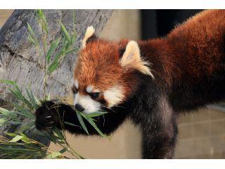 動物本来の習性や生態を活かした展示が人気の旭山動物園。
