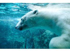 旭山動物園では動物たちのいきいきした姿が観られます。