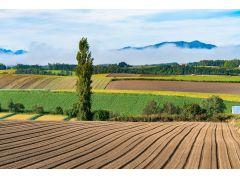 碁盤の目のように分割された畑に様々な種類の作物が植えられているパッチワークの路