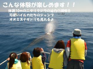 ニタリクジラの迫力の潮噴きは興奮します