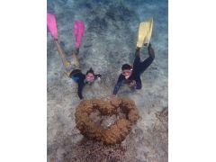 ツアーでしか見る事の出来ないハートの珊瑚!ハートに願い事をしてみては?