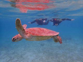 海ガメと一緒に泳げる優越感!そんな世界観を覗きにきませんか?