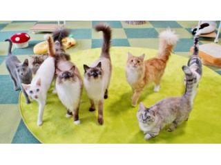 【秩父★猫カフェ】30分コース!いつ来ても猫が寄ってきて触れあえて猫と遊べる!