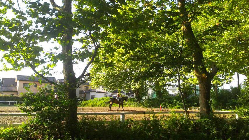 【初心者の方も安心♪ちょっぴりお試し引き馬体験★15分★】~新潟乗馬クラブで馬と...