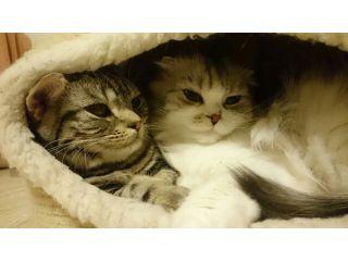 【13匹の猫スタッフがお出迎え♪】まるでお家のような空間で楽しむ猫カフェ★〈2時間入場プラン〉