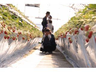 【兵庫・加東市】『かおり野』30分食べ放題のいちご狩り!<コロナ対策実施>