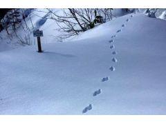 木曽おんたけ健康ラボの森で動物の足跡を探すなど、のんびりと癒しの時間を。