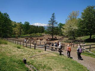 見どころは、木曽馬の牧場から一望する御嶽山です。ビューポイントもご案内します。