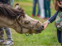 穏やかな性質で優しい目をした木曽馬とふれあい、癒しの時間を。