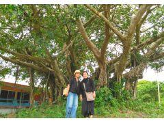 樹齢何百年の大木『ガジュマル』からパワーをもらいます。