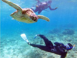 スキンダイビング を練習するとこんなに近くを泳げます!