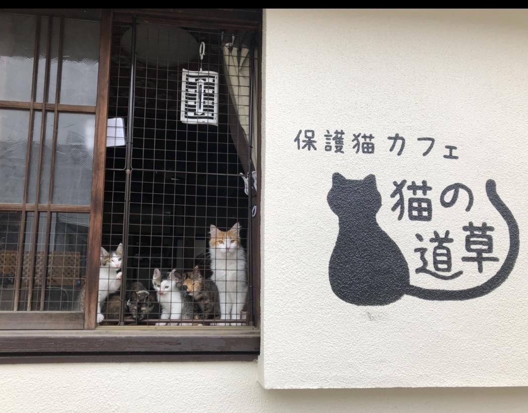 【基本セット】入場+ドリンクセット/かわいい猫ちゃんとのふれあいをお楽しみ下さい