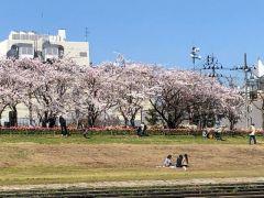 桜が満開のシーズンにはこのような風景を楽しめます♪