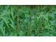 希少昆虫 長沼のルリイトトンボ