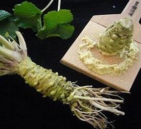 月山の湧水で育てた\山葵醤油づくり、またはわさび漬け加工体験/ オールわさび料理...