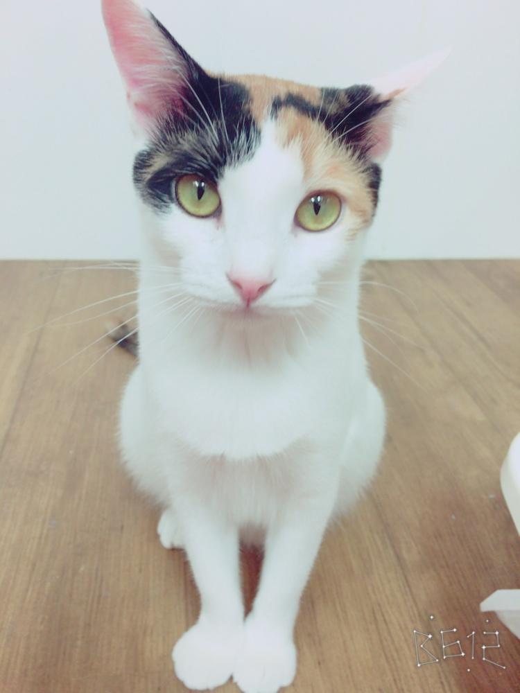 【 保護猫カフェ/90分 】*約30匹のかわいい猫達とたっぷり遊んで癒される時間...