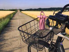 6月は麦秋の中を自転車で駆け抜けると気持ちが良いですよ!