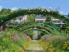 花の庭 薔薇の季節 (5月中旬頃撮影) ~モネの庭では5月上旬から6月上旬頃までが薔薇の季節 約200種/500本が園内を彩ります~