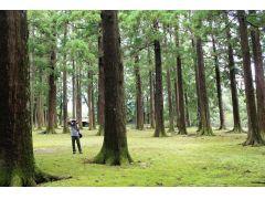 旧本丸跡(癒しの森)
