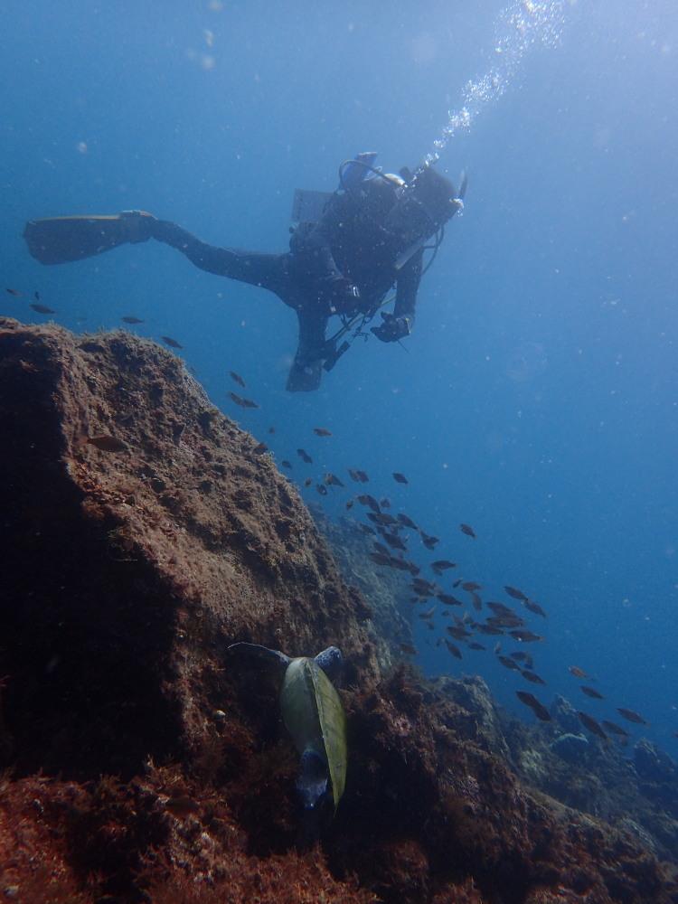 体験ダイビング!水中世界を楽しもう♪