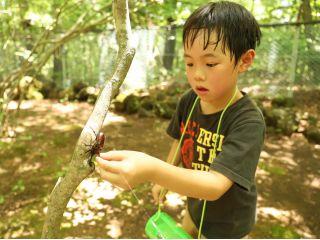 カブトムシ狩り体験(カブトムシ採集体験)は、富士すばるランドの夏休み一番人気の体験です!
