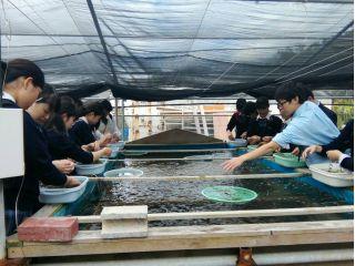 【うるま市 平安座島】お土産付き!!とっておきの海ぶどうを養殖・収穫体験!!!