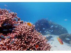 珊瑚には可愛い魚たちが群がっています!探検しながら、見つけて下さいね♪