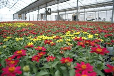 年間生産量400万ポットの農場から、お気に入りの花苗を選んでください。ツアーの時間は2時間ですが、気のすむまで農場でお気に入りを探し続けていいですよ! ^^。