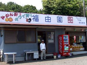 【みかん狩り☆食べ放題】秋の味覚のみかんを食べよう!