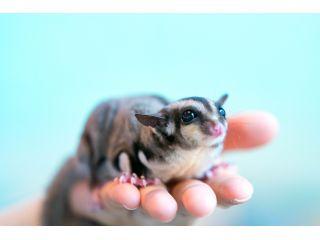 【奈良三条通り沿い】かわいい小動物たちと触れ合おう♪ドリンク付き1時間入園プラン♪