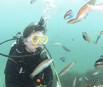 【きれいな伊豆の海で体験ダイビング】◆初心者でも安心♪世界的にも有名な伊豆の海で...
