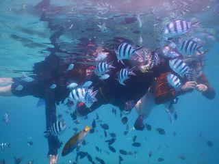 熱帯魚に囲まれちゃいます