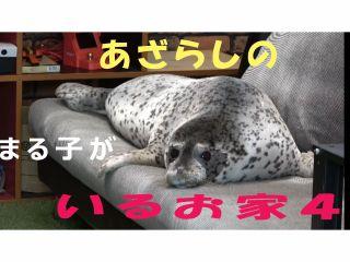 ゴマフアザラシのまる子です。たまにソファーでゴロゴロします!