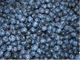 「健康で美味しい作物づくり」を農園全体のモットーとし、「中嶋農法」によるミネラルたっぷりで高品質なブルーベリー作りを目指しております。