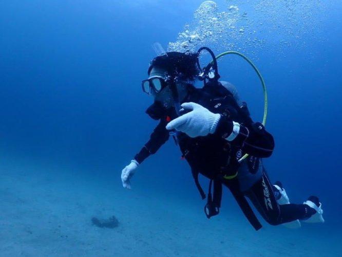 【体験ダイビングプラン】◆\初めての方大歓迎/透明度の良い伊豆の海でダイビング!...