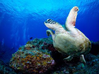 【当日予約OK!!】【最大6名様まで】コロナに負けるな! ウミガメ!ニモ!サンゴ礁!全部見れちゃうシュノーケリングよくばりプラン♪