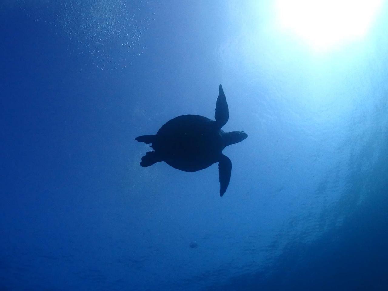 【初めての方大歓迎☆シュノーケリング】◆\海の世界にようこそ/きれいな伊豆の海で...
