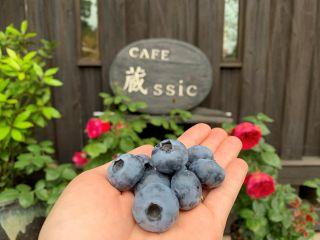 新鮮な大粒のブルーベリー