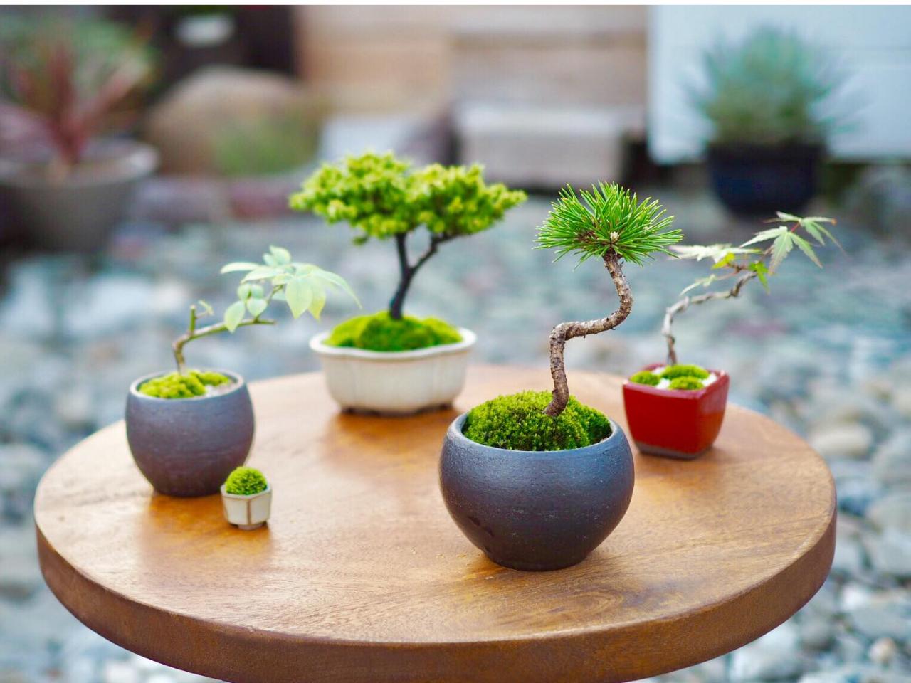 《阿波庭縁のちいさな盆栽教室》あなただけの小さな盆栽を作って、四季を身近に感じて...