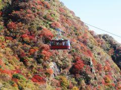 人気の紅葉シーズン